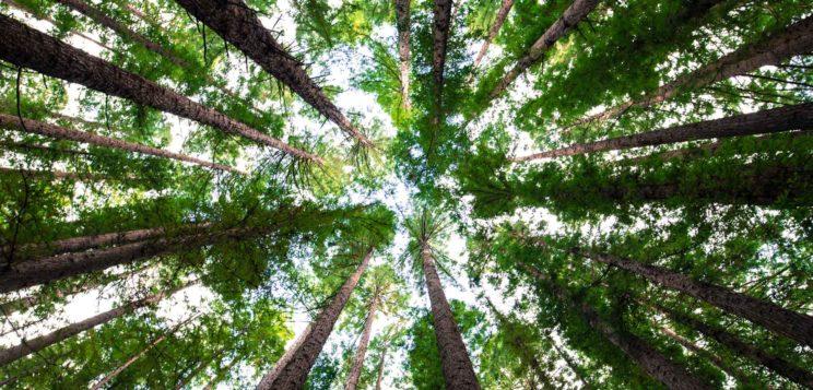Wenn der Wald voller Bäume nicht mehr sichtbar ist - Coach the Coach
